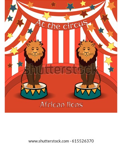 circus lions in the amazing