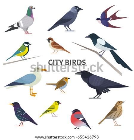 city birds vector collection