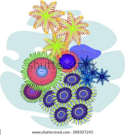 clavularia  zoanthus   soft
