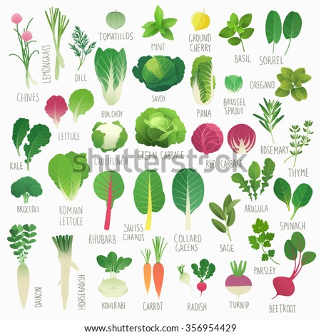 Clip art food collection Vol.1: vegetables and herbs