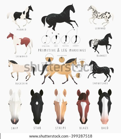 Horse coat colors and markings - photo#27