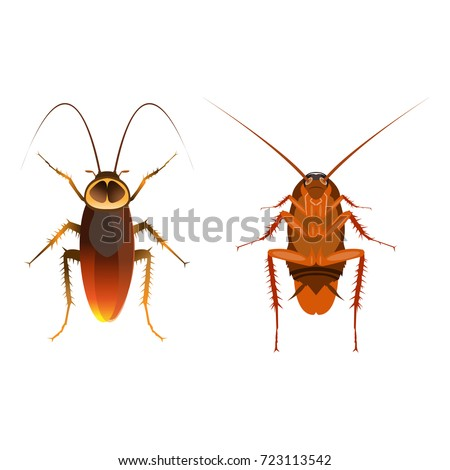 Close up cockroach image, cartoon flat-style vector illustration.