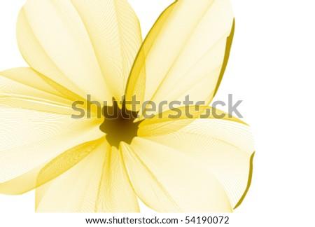 close up flower background