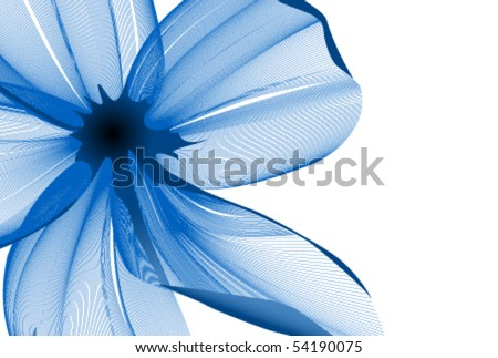 close up flower background
