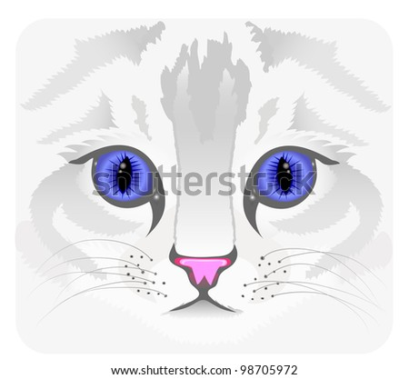 close up of cat face