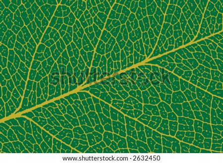 close up of green leaf showing