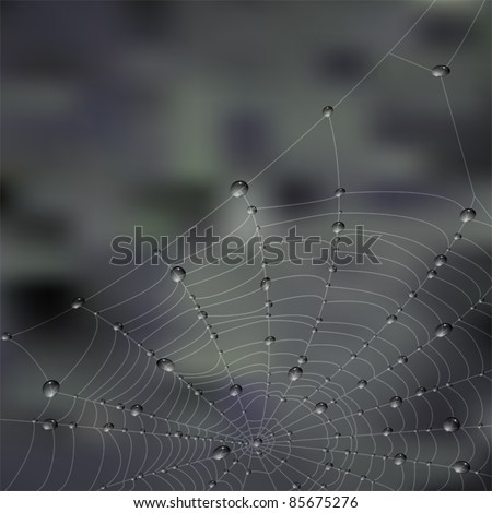 Close up of spider web with dewdrops