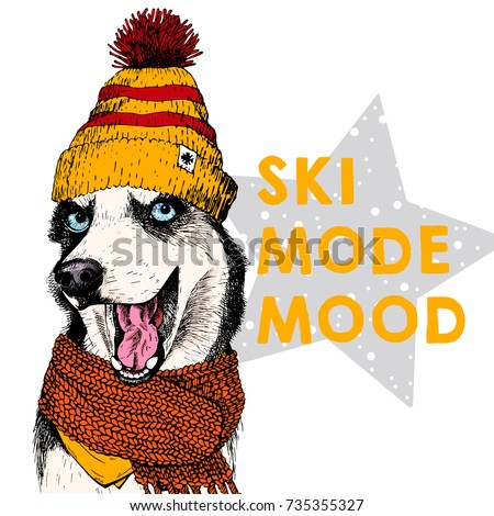 Close up vector portrait of Siberian husky dog wears beanie and scarf. Ski mode mood. Skecthed colored illustraion. Christmas, Xmas, New year. Party decoration, promotion, greeting card.