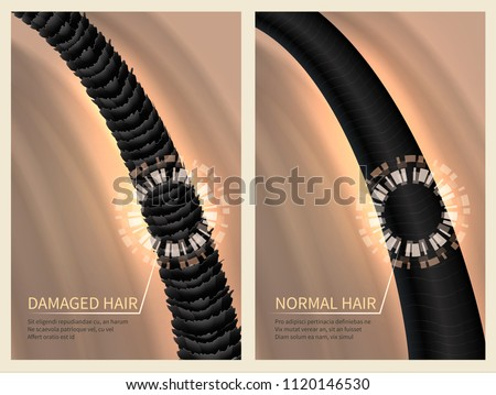 Closeup damaged harsh and normal healthy hair. Vector illustration for haircare concept. Healthy hair and banner care for shampoo