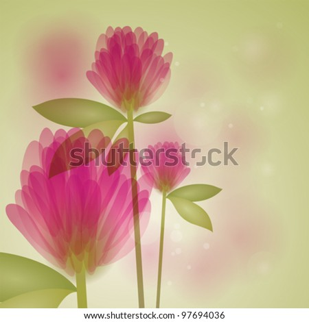 clover   floral fresh background