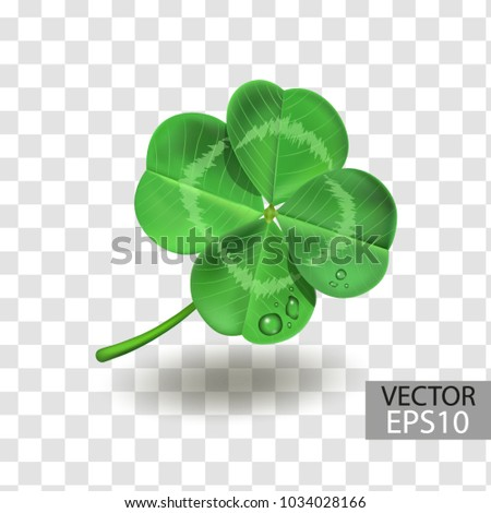 clover leaf isolated on a