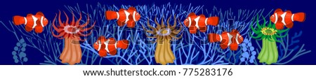 clownfish and red beadlet