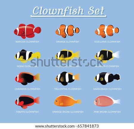 clownfish anemonefish set