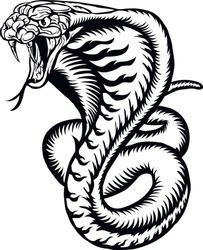 Cobra illustration. Snake vector image.