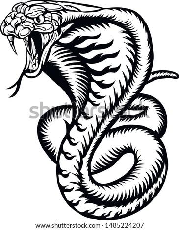 cobra illustration snake