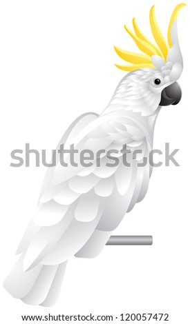 Cockatoo parrot, exotic bird with white plumage and yellow crest vector illustration