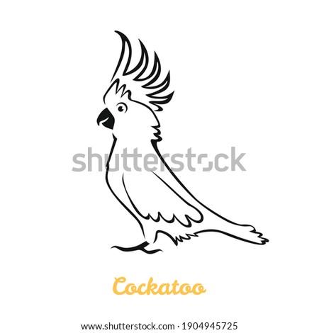 cockatoo parrot vector cartoon