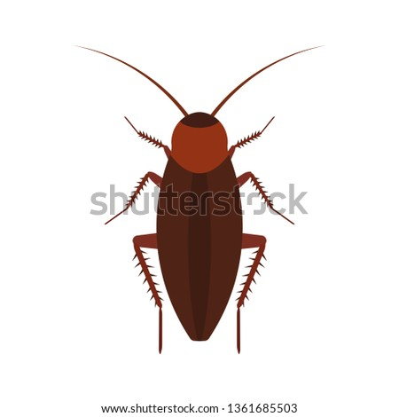 Cockroach insect vector icon above pest. Brown animal top view cartoon bug. Flat body parasite pollution