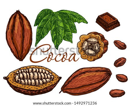 Cocoa beans, cocoa leaves, cocoa branch with fruits of cocoa, chocolate. Elements are isolated. Chocolate ingredient. Great for banner, poster, label.