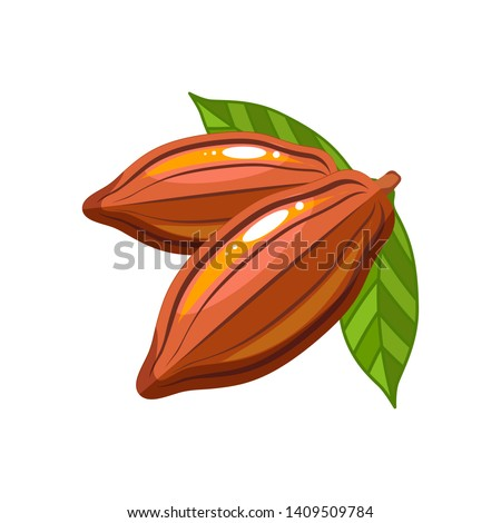 Cocoa beans Flat style illustration. Chocolate tree fruit. Cacao vector icon