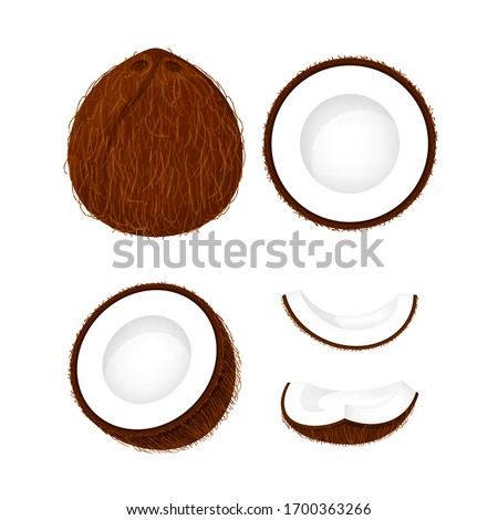 coconut brown fruit and half cut isolated on white, illustration coconut brown half slice for clip art, coconut simple for icon, vector