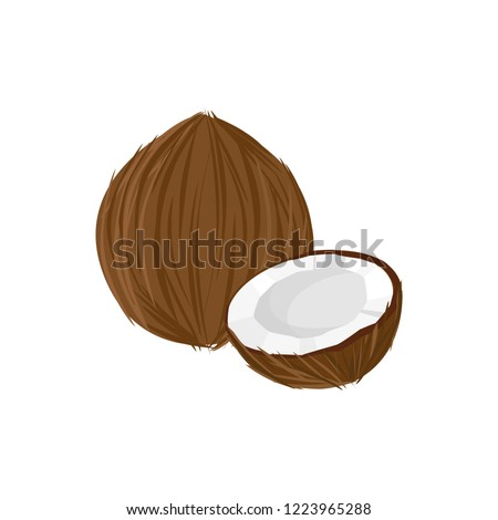 coconut isolated on white background. Bright vector illustration of colorful half and whole of juicy coconut. Fresh cartoon