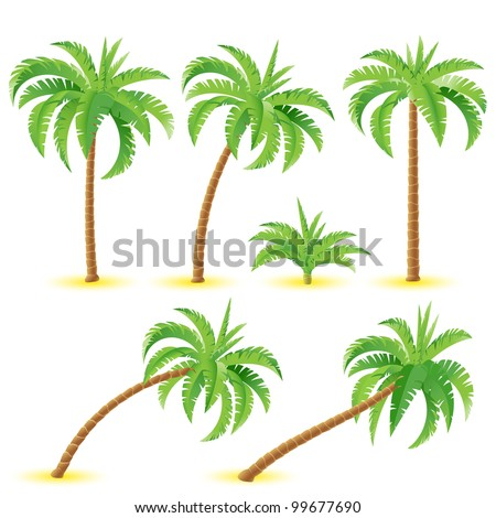 coconut palms illustration on