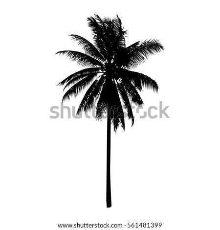 coconut tree, isolated natural plant sign, vector
