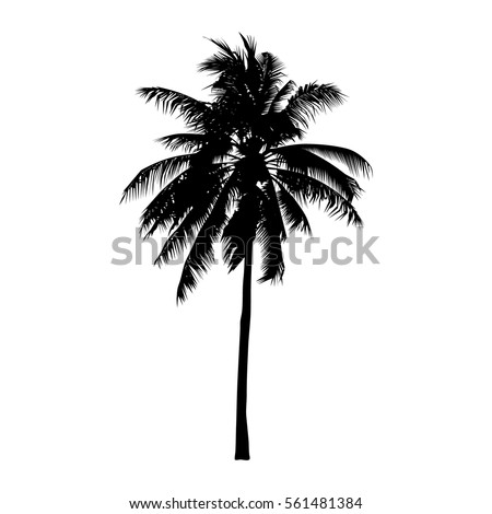 coconut tree, isolated natural sign, vector