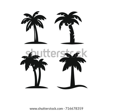 coconut tree palms for travel