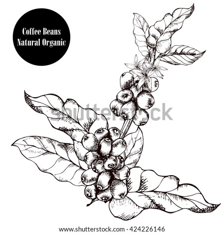 coffee branchnatural organic
