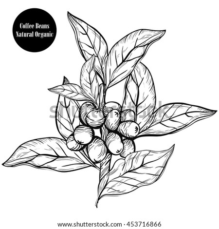 Vector Images Illustrations And Cliparts Coffee Branch Natural