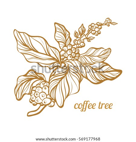 Vector Images Illustrations And Cliparts Coffee Branch With Leaves