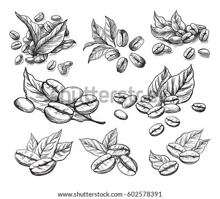 coffee grains and leaves in
