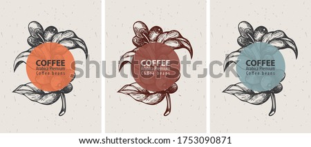 Coffee labels in retro style. Set of three vector labels for coffee beans with hand-drawn coffee sprig, coffee beans on an old paper background