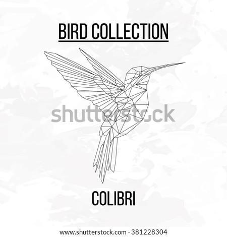 colibri bird geometric lines