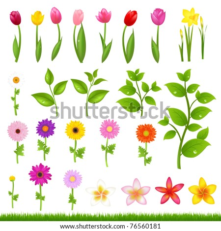 Collection Beautiful Flowers And Grass, Isolated On White Background, Vector Illustration