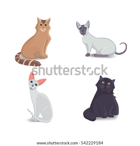 collection cats of different