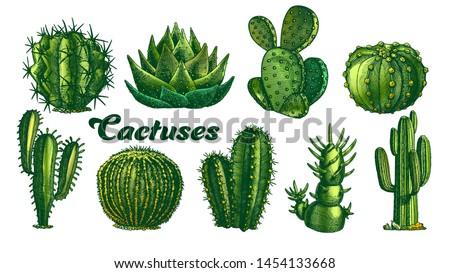 Collection Desert Plants Cactus Set Vintage Vector. Different Succulent Prickly Spine Cactus Exotic Nature Decorative Houseplant Concept. Designed Template Color Illustrations