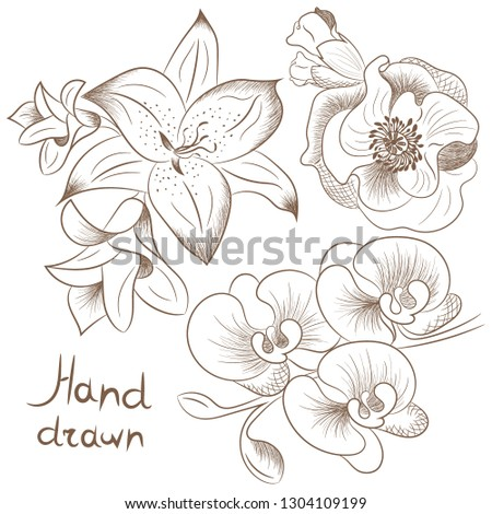Collection flowers. Illustration in ancient style engraving. Hand drawing hatching. Vintage vector drawing on wite background. #1304109199