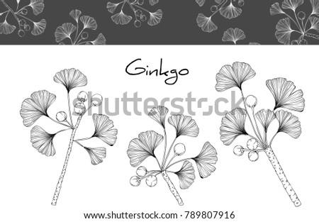 Line Art Hand : Free hand drawn ginkgo leaf download vector art stock