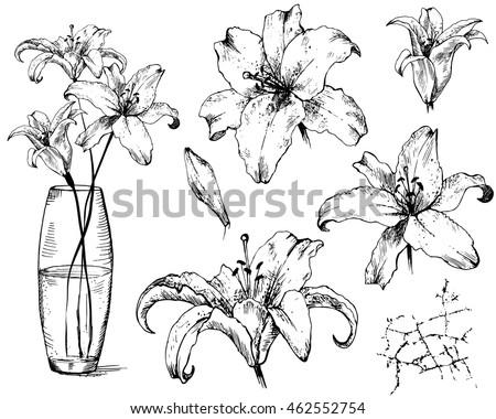 Ink Drawing Flower Brushes Free Photoshop Brushes At Brusheezy