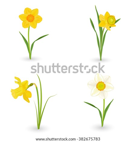collection lovely daffodils....
