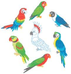 Collection of amusing and colorful tropical parrots, vector illustrations in a cartoon style