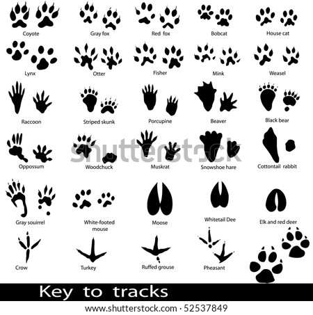Collection of animal and bird trails with name