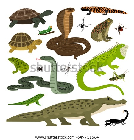 collection of animals and