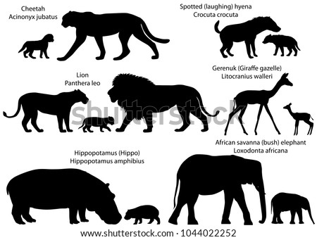 Collection of animals with cubs living in the territory of Africa, in silhouettes: lion, cheetah, gerenuk, hippopotamus, african savanna elephant, spotted hyena