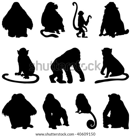 Collection of apes silhouettes. Vector illustration.