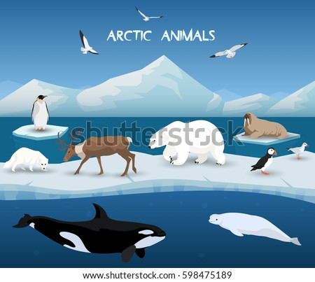 collection of arctic animals in