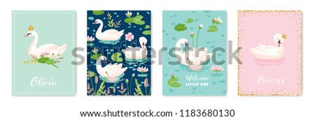 collection of beautiful swans